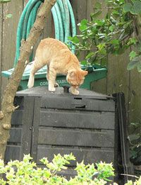 composting kitty litter. It's perfectly safe as long as your compost pile gets hot enough.