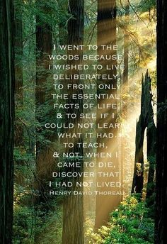 """""""I went to the woods because I wished to live deliberately, to front only the essential facts of life and to see if I could not learn what it had to teach, and not, when I came to die, discover that I had not lived."""" ~ Henry David Thoreau"""