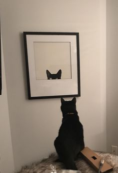Cat trying to figure out new artwork on the wall.