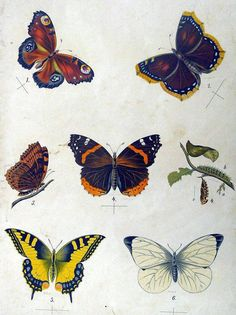 Butterfly. Dragonfly Insect, Aste, Science And Nature, Rooster, Cool Pictures, Butterflies, Drawing, Spring, Organizing