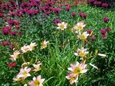 Garden Kunert Kreations Gordon, WI
