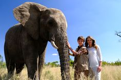 The movie An Elephant's Journey: trailer, clips, photos, soundtrack, news and much more! Nairobi City, Elizabeth Hurley, Movie Trailers, Elephants, Teaser, Phoenix, Journey, Adventure, Check