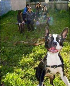 Perros que arruinaron fotos de la manera más chistosa