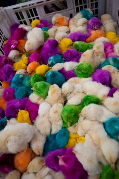 Colorful baby chicks at the market in Xela, Guatemala. >> omg 10/10 on the snuggle scale!
