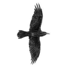 Tatuaje cuervo negro volando