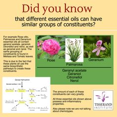 Did you know that sometimes essential oils from totally different plants contain the same groups of constituents?  For example essential oils of Rose, Geranium, Palmarosa, Melissa and Tomato leaf (not commercially produced) all contain geranyl