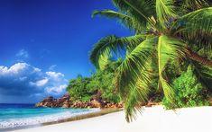 壁紙をダウンロードする モルディブ, トロピカルビーチ, 砂, ヤシの木, 熱帯地域, 海洋
