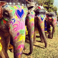 Just a beautiful photo of painted elephants from the Holi festival in India Elephant Love, Elephant Art, Colorful Elephant, Indian Elephant, Elephant India, Ganesh, Holi Festival Of Colours, Holi Celebration, Elephants Never Forget