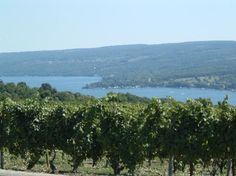 The Finger Lakes: Keuka Lake as seen from a vineyard above the water.