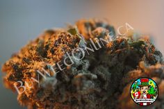 10 Dollar BC Bud Weed Salad from McChronalds mail order marijuana. Get high quality British Columbia weed online, just register online now.