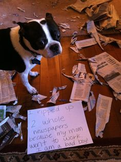 I ripped up 2 whole newspapers because my mom went to work. I'm a bad boy! - Charlie