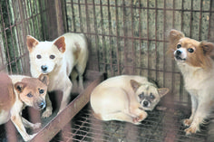 #Puppies saved from South #Korean farm find new life in the US