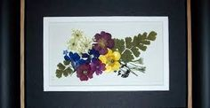 Image result for Seal pressed flower pictures before framing