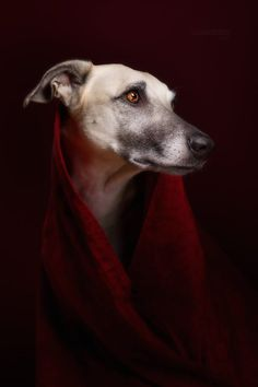 Romanticizing my dogs... me? Never! by Elke Vogelsang on 500px