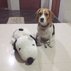 """Can I play with Snoopy now, mommy?…"""