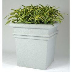 "Allied Molded Products Sarasota Square Planter Box Size: 32"" H x 30"" W x 30"" D, Color: Bone"