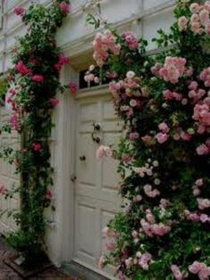 Roses gardens..want on my front porch... sooo cute..