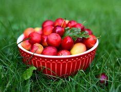 Na czerwono... #evening #summer #garden #greengate #alice #red #fruits #plums