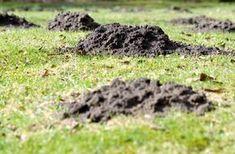 Maulwürfe und Wühlmäuse vertreiben - how to get rid of moles and voles