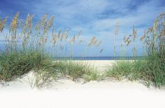 Honeymoon Island, Dunedin Florida - turquoise waters and white sand beach - HoneyMoon Archives 2019 Visit Florida, Florida Vacation, Florida Honeymoon, Florida Living, Tampa Beaches, Sandy Beaches, Tampa Attractions, State Parks, Caladesi Island State Park