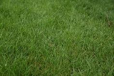 Znalezione obrazy dla zapytania trawa tekstura