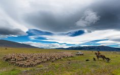 Sheep Patrol by Evgeny Tchebotarev on 500px