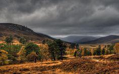Cairngorms, Scotland > where our Speyside Wildlife Watching holidays are based. www.speysidewildlife.co.uk