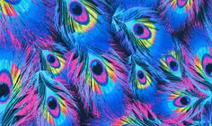Peacock Paradise < Ladies < Tie Detail Brief   Funkita Swimwear ...