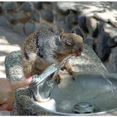 Aw, helping a squirrel out. #water