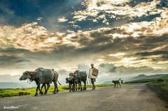 rural life Photo by ganesh bagal — National Geographic Your Shot