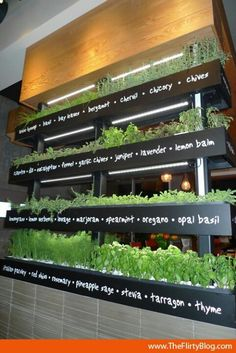 Growing Herbs Indoors - perfect accent for a small organic restaurant