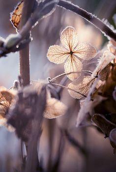 frozen by Jessica Tekert on 500px