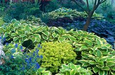 This shade garden at Bressingham Gardens has wonderful color and contrast