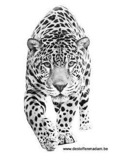 strijkapplicatie luipaard Pencil Drawings Of Animals, Animal Sketches, Art Drawings Sketches, Jaguar Tattoo, Big Cat Tattoo, Tiger Tattoo, Jaguar Wallpaper, Animal Wallpaper, Bild Tattoos