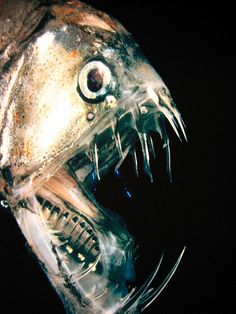 Scary Deep Sea Fish | deep sea fish are scary | Flickr - Photo Sharing!  Pinterest Perfection  Get Your (Free Copy)  http://pinterestperfection.gr8.com