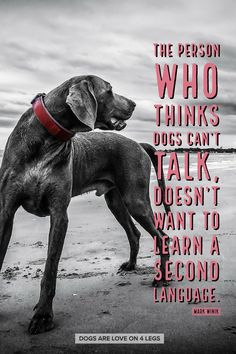 Dog Quote - The person who thinks dogs can't talk... Dog, Dog Quotes Inspirational Quotes, Funny Quotes, Life Quotes