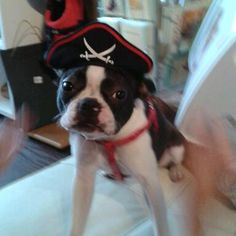 Mabel modelling on of our Pirate Hats.