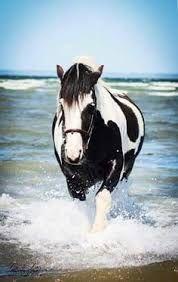 Resultado de imagen para caballo con fondo arboleda