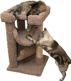 Small Cat Tree Bed Brown 33 inch Carpet Cat Furniture Wood with Sisal Rope Large Cats ** Learn more by visiting the image link. (This is an affiliate link and I receive a commission for the sales) #MyCat