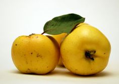 Smyrna Quince Tree - Quince Trees - Willis Orchard Company
