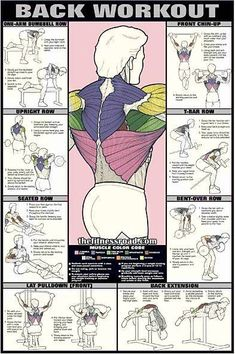 back-workout-chart