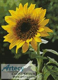 Sunflower cross stitch pattern.
