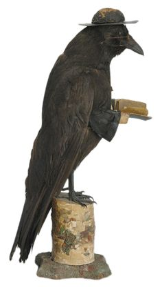 """This is an antique Victorian taxidermy of a raven portrayed as a priest. The bird is circa 1900 and has been fitted with horn rim glasses, a white cross, hands, a bible and a typical minister's hat. It is 17 inches tall.""  www.quintessentia..."