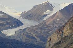 Arktis   Avifauna Consult