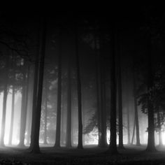 Royalty-free Image: Foggy night in the forest