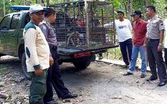 Indonésia recorre a caçadores para acabar com proliferação de macacos