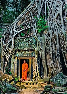 A Cambodian Buddhist monk stands in a doorway beneath a huge tree at Ta Prohm temple.  Angkor, Cambodia.  Ta Prohm Temple