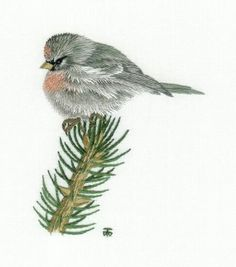 Red Poll Needle Painting Embroidery Kit - Hand Embroidery Design as an Alternative to Cross-stitch.