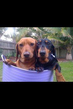 Rub-a-dub-dub.  Two doxies in a tub! :)