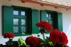 reglaki csendélet How Beautiful, Beautiful Places, Hungary, Countryside, Roots, Plants, Life, Plant, Planets